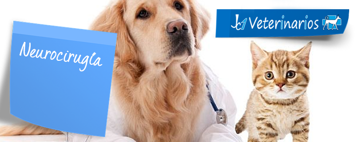 Neurocirugía veterinaria en Murcia - Jc1 Veterinarios