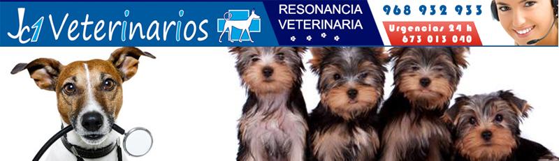 JC1 Veterinarios  Veterinarios en Murcia